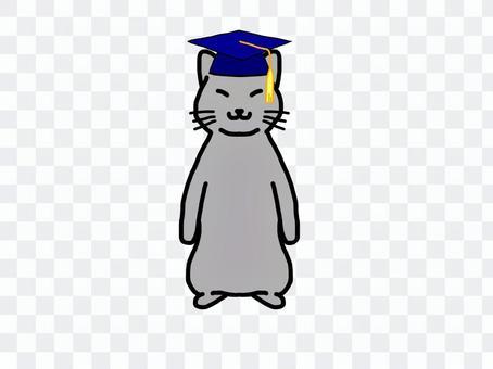 灰猫 学士帽