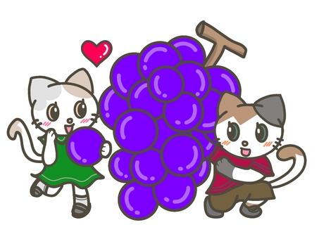 大葡萄(巨峰)和貓