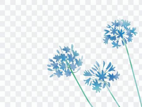 愛情花藍色