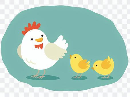 雞的父母和孩子