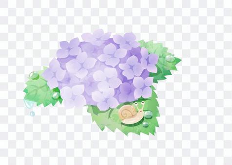紫陽花とカタツムリ