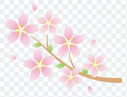 Sakura no Hana 09