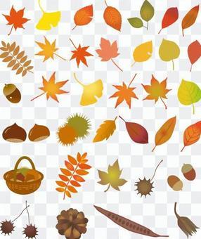 秋天的秋天的葉子