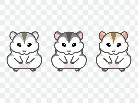 3種Djungarian倉鼠