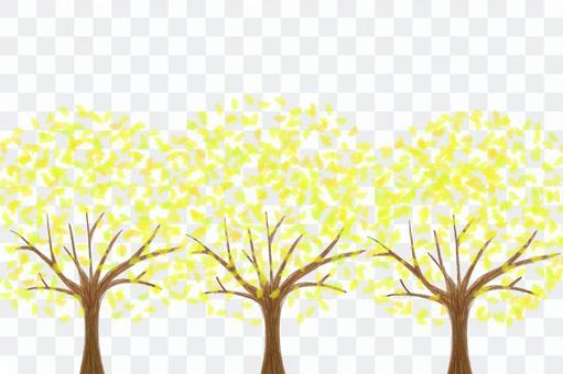 銀杏樹3銀杏一排樹