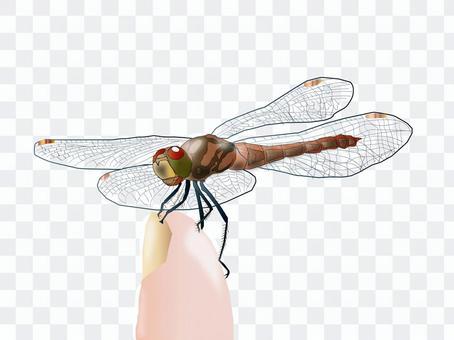 蜻蜓停在你的手指上01