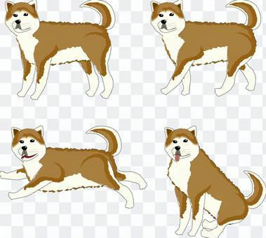 秋田犬 犬 ペット 番犬 大型犬