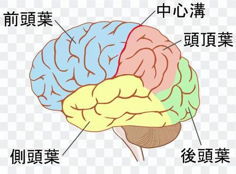 大腦網站,名稱