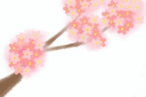 櫻桃樹枝2