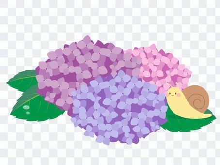 蝸牛和八仙花屬