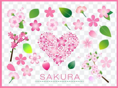 櫻花素材集(png為透明背景)