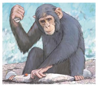 Monkey breaking nuts