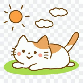 ひなたぼっこをする猫