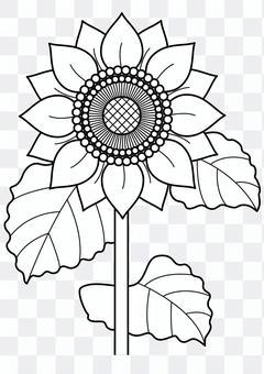 向日葵2  -  1 c