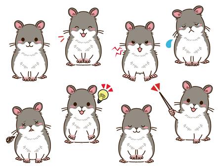 倉鼠(灰色)姿勢合集