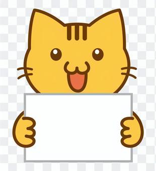 紙板手中的野營貓