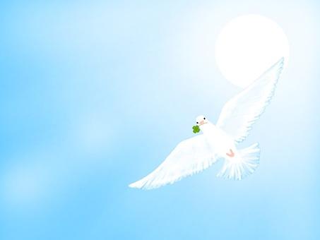 하늘과 비둘기 시리즈!