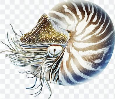 Deep sea ancient creature ammonite real illustration