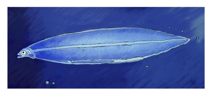日本鰻魚幼蟲