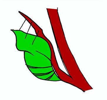燕尾蝶(花)