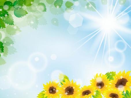 夏天的圖像012