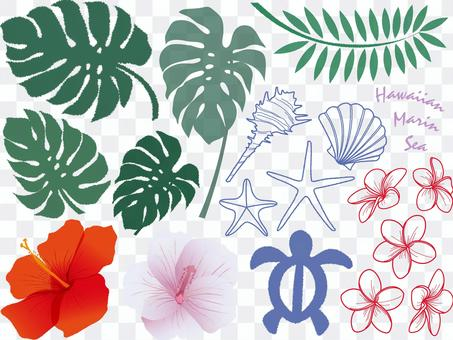 A variety of tropical flowers