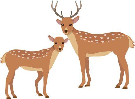 Deer male and female
