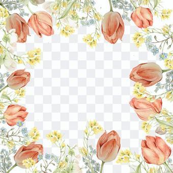 鬱金香和強姦花花框架