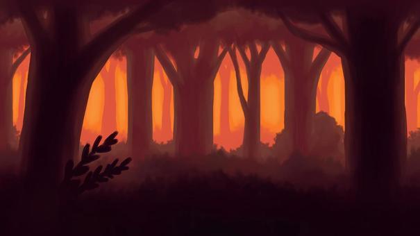 在茂密的傍晚森林中的背景16:9