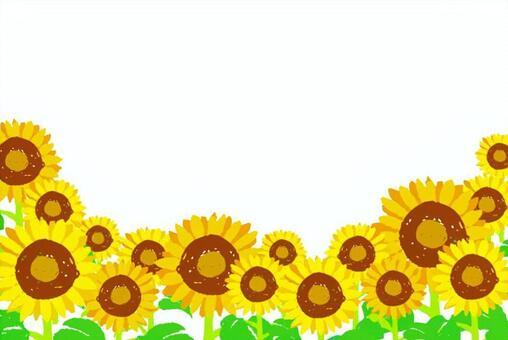 向日葵領域