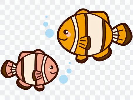 小丑anemonefish圖