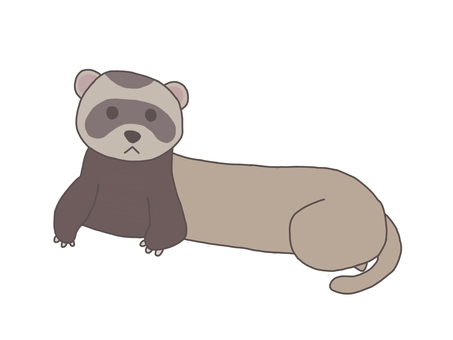 Ferret looking at the front