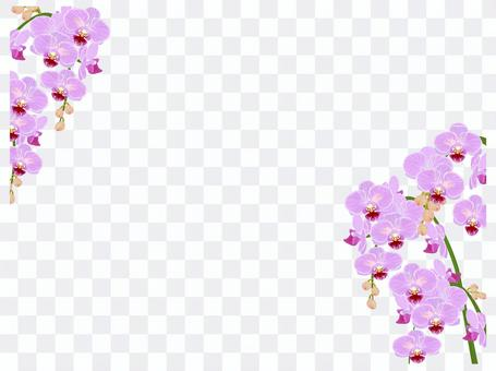 Orchid frame pink