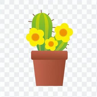 室內植物 - 仙人掌支柱(二,黃花)
