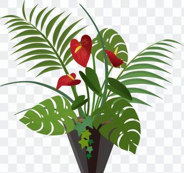 種植觀葉植物