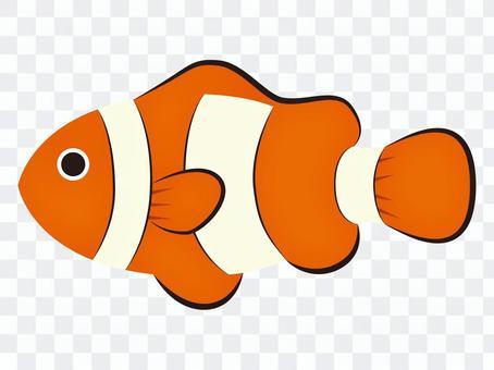 小丑anemonefish