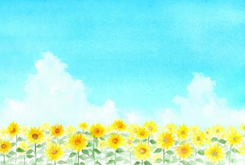與透明水彩的向日葵領域圖畫