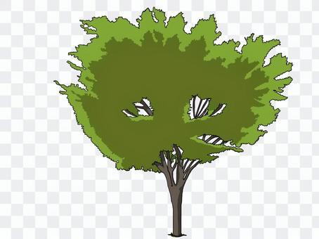 街路樹(新緑)
