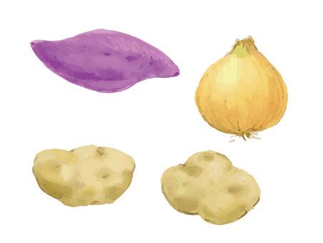 水彩紅薯、土豆、洋蔥