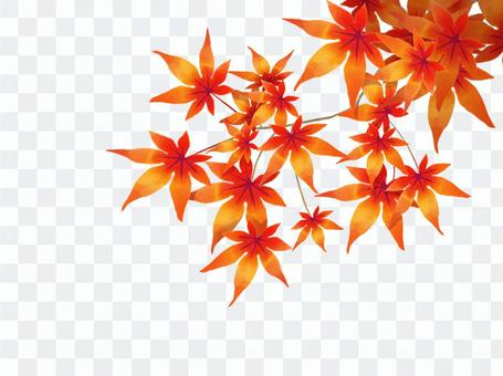 Autumn leaves (with branches)