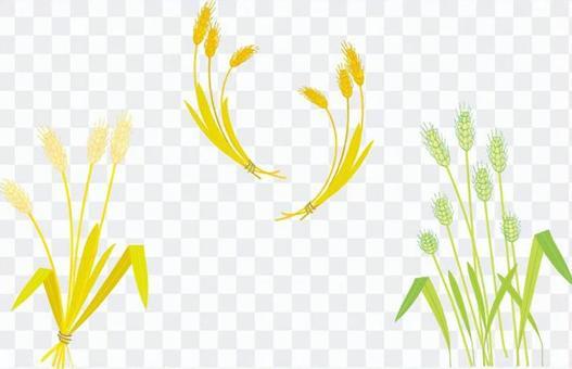 小麥的3個插圖