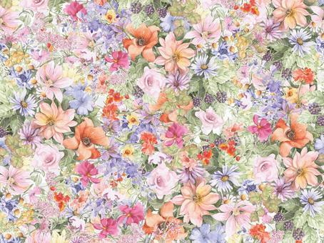 꽃 테두리 350- 오렌지 양귀비와 동료의 꽃들