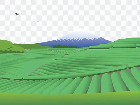 富士山和茶園
