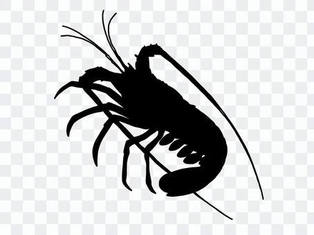 影子刺龍蝦