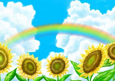 Sunflower and summer