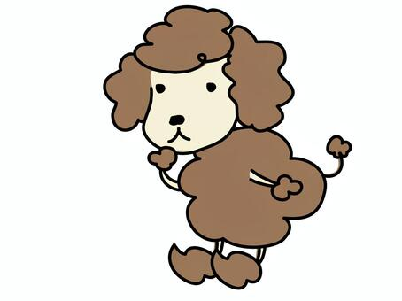 toy poodle?