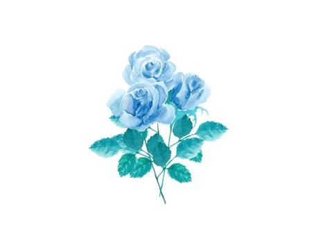Blue rose drawn in watercolor