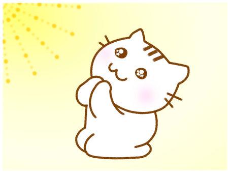 Pray 3 white cat