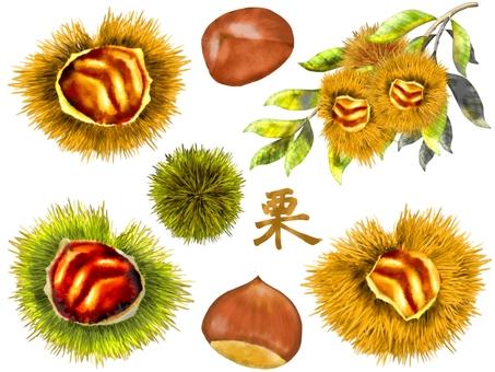 Chestnut illustration set
