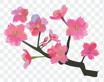 Even cherry blossoms or peaches
